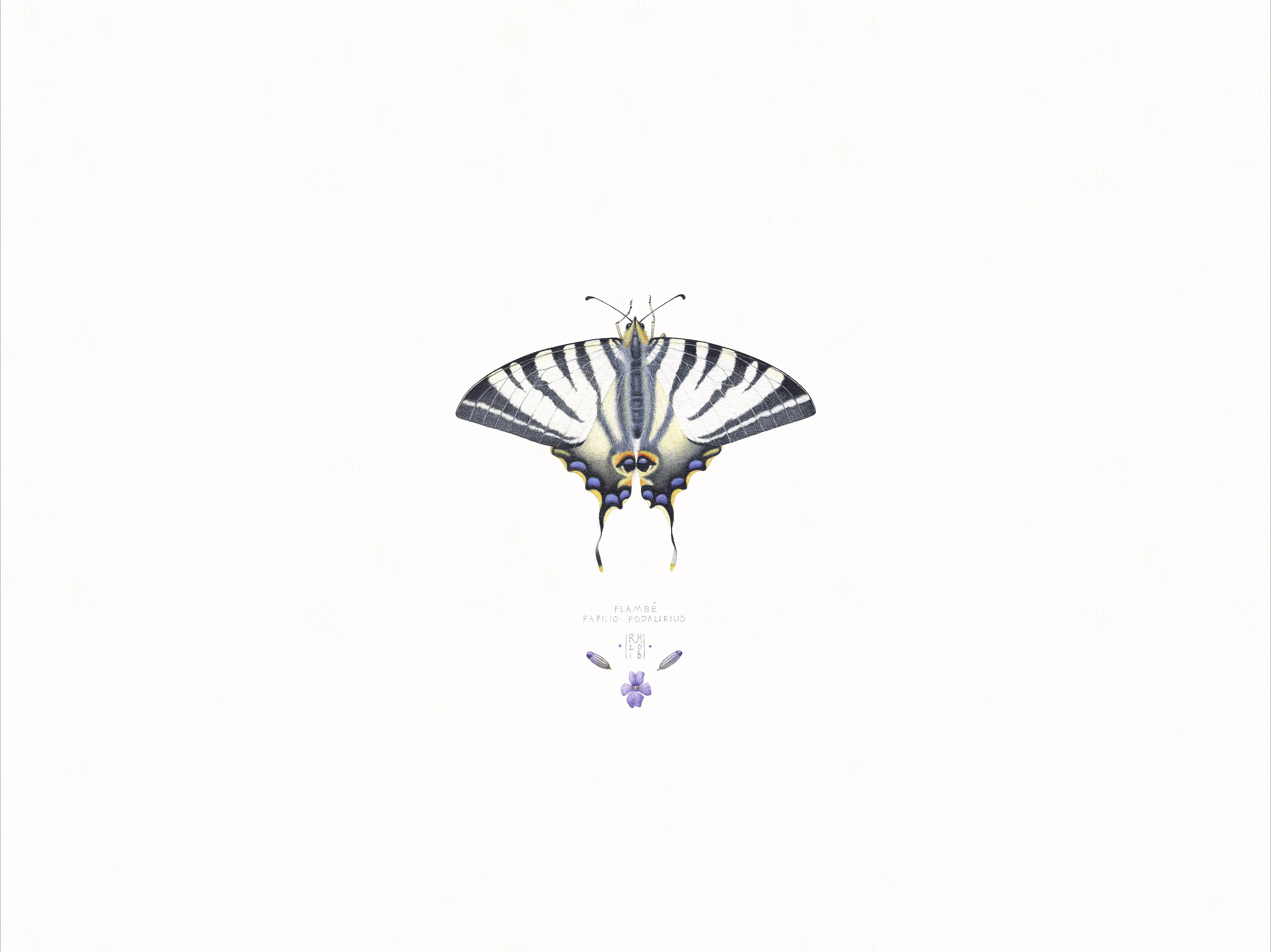 6. Papilio Podalirius