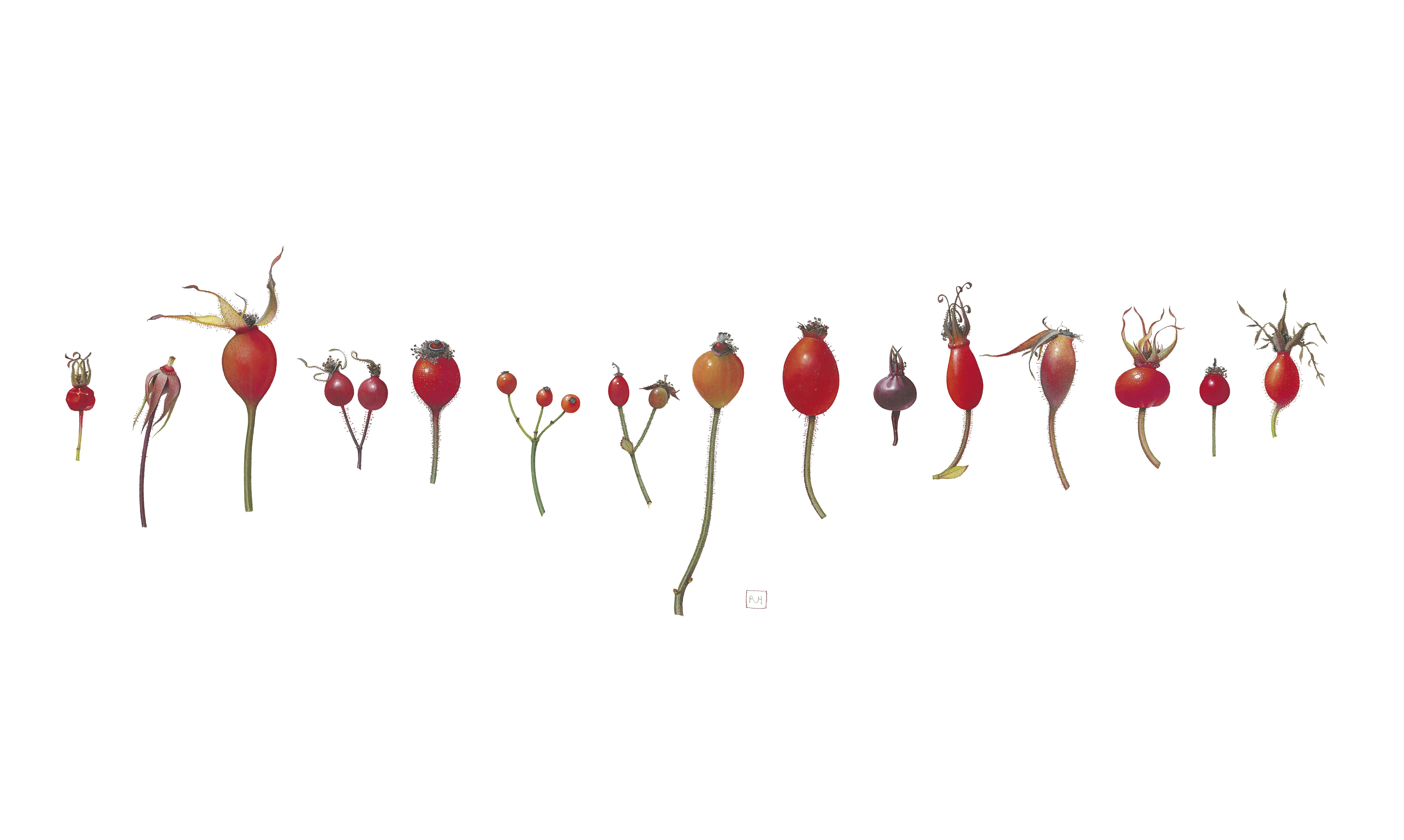 14. Roses I